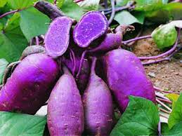 Purple Sweet Potato Benefits 101